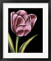Framed Vibrant Tulips III