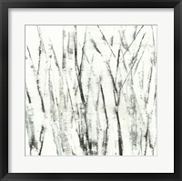 Framed Birches I