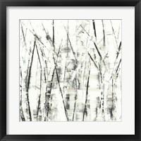 Framed Birches II