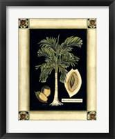 Framed Paradise Palm V
