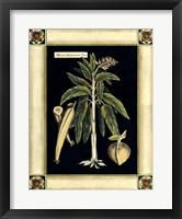 Framed Paradise Palm VI