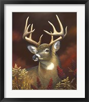 Framed Deer Portrait