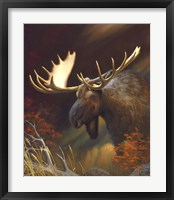 Framed Moose Portrait
