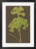 Framed Ferns on Linen II