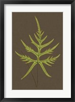 Framed Ferns on Linen IV