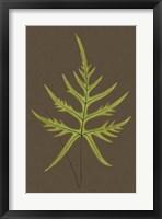Framed Ferns on Linen IV