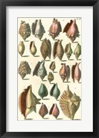 Framed Shell Collection III
