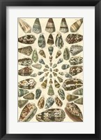 Framed Shell Collection V