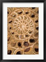 Framed Ammonite I