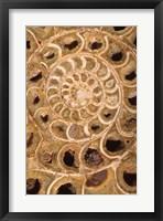 Framed Ammonite I
