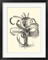 Framed B&W Besler Aloe