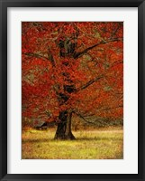 Framed Autumn Oak II