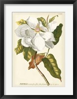 Framed Magnificent Magnolias I