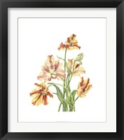 Framed Tulip Spray I