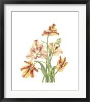 Framed Tulip Spray I