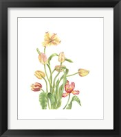 Framed Tulip Spray II