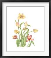 Framed Tulip Spray II