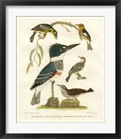 Framed Antique Kingfisher I