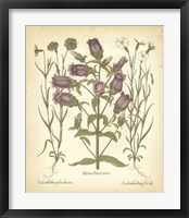 Framed Tinted Besler Botanical II