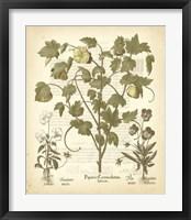 Framed Tinted Besler Botanical IV