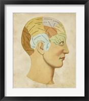 Framed Vintage Phrenology