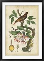 Framed Antique Bird in Nature I