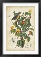 Framed Antique Bird in Nature III