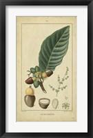 Framed Vintage Turpin Botanical IV
