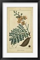 Framed Vintage Turpin Botanical VI