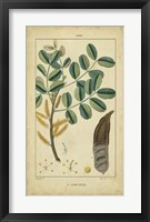 Framed Vintage Turpin Botanical VII