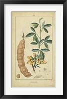 Framed Vintage Turpin Botanical VIII