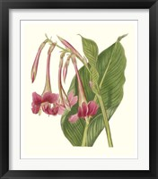 Framed Tropical Indian Reed