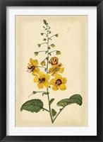 Framed Floral Varieties I