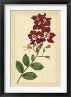 Framed Floral Varieties II