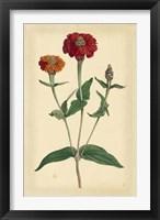 Framed Floral Varieties III