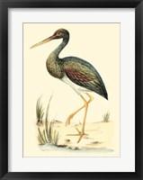 Framed Water Birds II