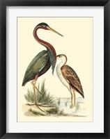Framed Water Birds III