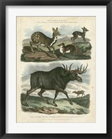 Framed Deer & Moose