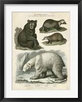 Framed Brown Bear & Polar Bear