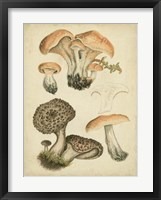 Framed Antique Mushrooms I