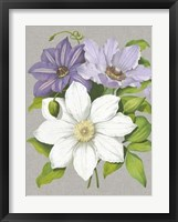 Framed Clematis Blooms II