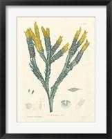 Framed Luminous Seaweed I