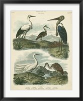 Framed Heron & Crane Species I
