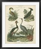 Framed Heron & Crane Species II