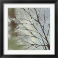Framed Diffuse Branches I