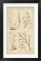 Framed Coralline II