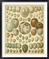 Framed Vintage Bird Eggs I