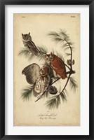 Framed Audubon Screech Owl