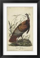 Framed Audubon Wild Turkey