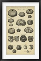 Framed Study of Shells III